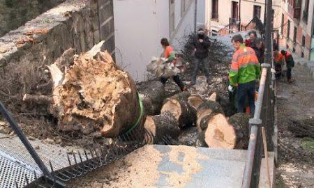 El viento tumba un árbol centenario en Bilbao (video)